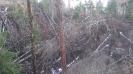 завал леса на озере_1